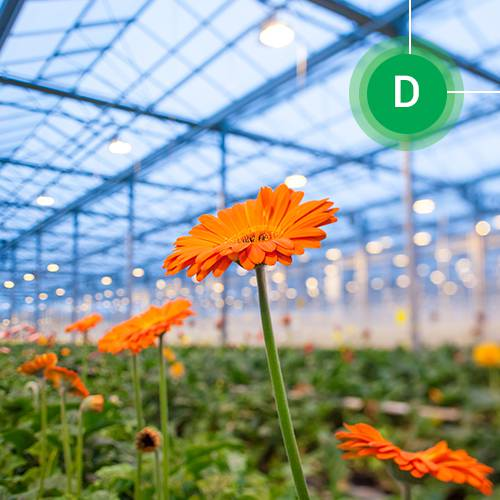 greenhouse, mulch, ginegar, agriplast, ग्रीनहाउस, एग्रीकल्चर, agriculture department , agriculture, india